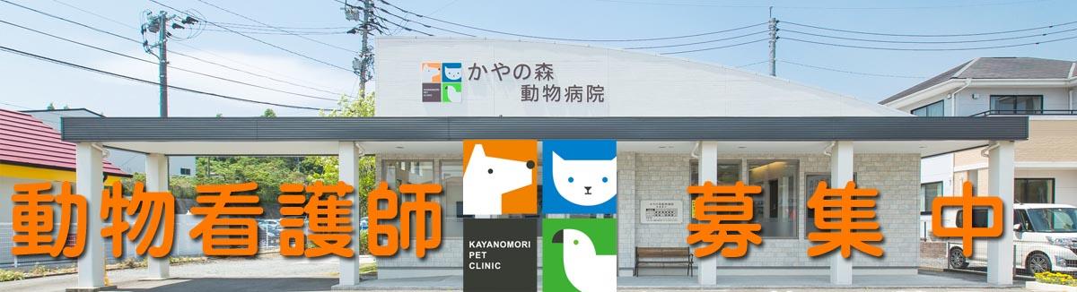 飯塚市 かやの森動物病院の求人 週休3日も選べる動物病院